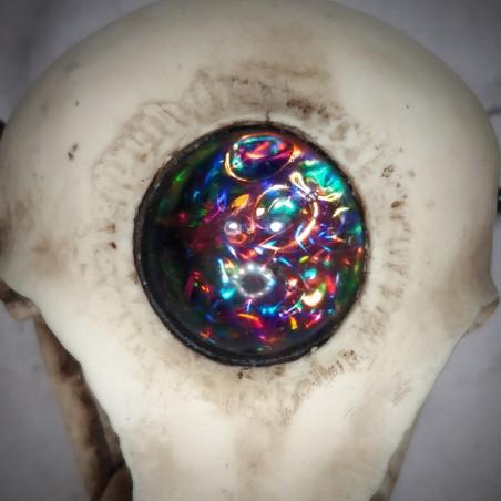 Ornement  crâne de corneille  boréale crâne de corbeau